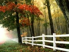 Flores Bach otoño